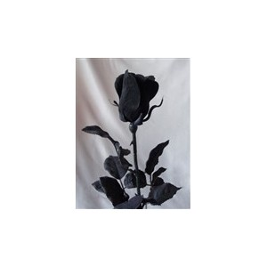 Černá růže 43